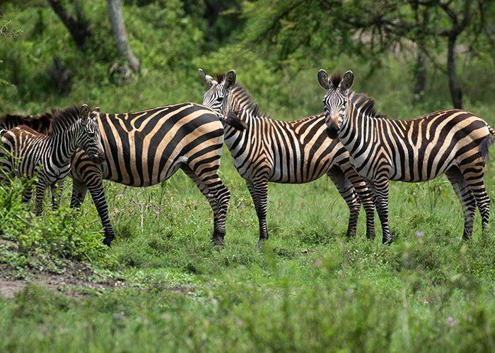 lake-mburo-safaris